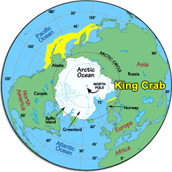 The Habitat of the King Crab in Yellow
